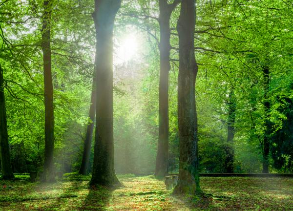 Eine romantische Waldlichtung lässt es bei Maria und Simon weiter knistern